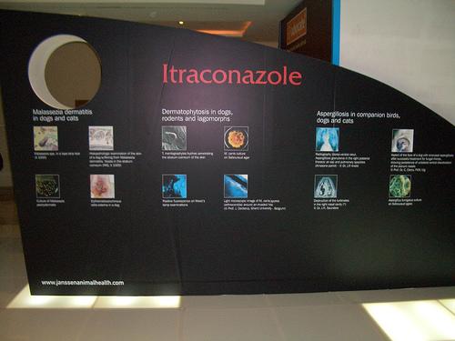 itraconazole23